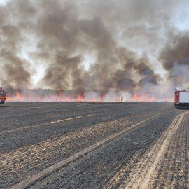 Feuer 2 AGO – brennendes Feld