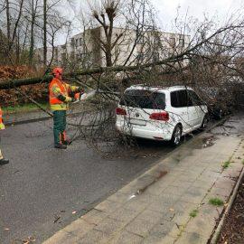 Hilfeleistung 1 – Bäume auf PKWs