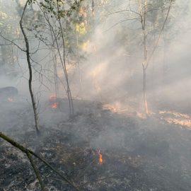 Feuer 2 AGO – brennt Grasfläsche, mehrere Stellen